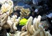 » Observadores del mar