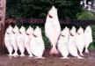 Pesques del món : La llegenda del peix gegant