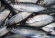 Pesques del món : Els visitants del Fiord