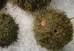 Pesques del  món:  El Gran Sud de Pablo,  garotes de mar a Xile