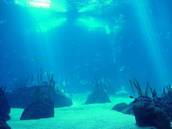 Resultat d'imatges de el fons marí