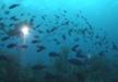 Reivindicació de Reserva marina en el Golf de Cadis