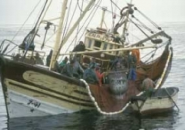 Primeres directrius mundials per reduir la pesca accidental