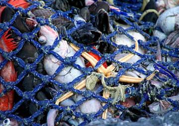 Oceana demana a la UE posar fi al